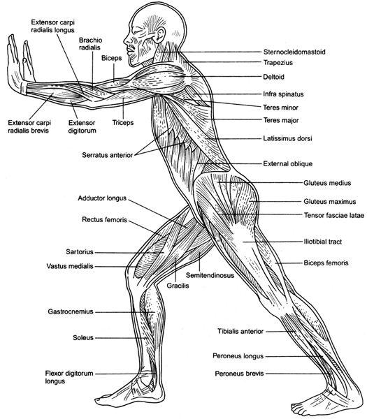 muscular weakness
